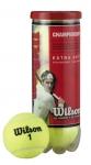 Tennisbälle- Wilson - Championship - 3er Dose